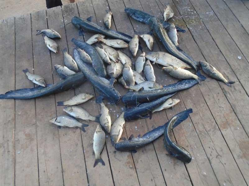 Рыба в Пионерском пруду