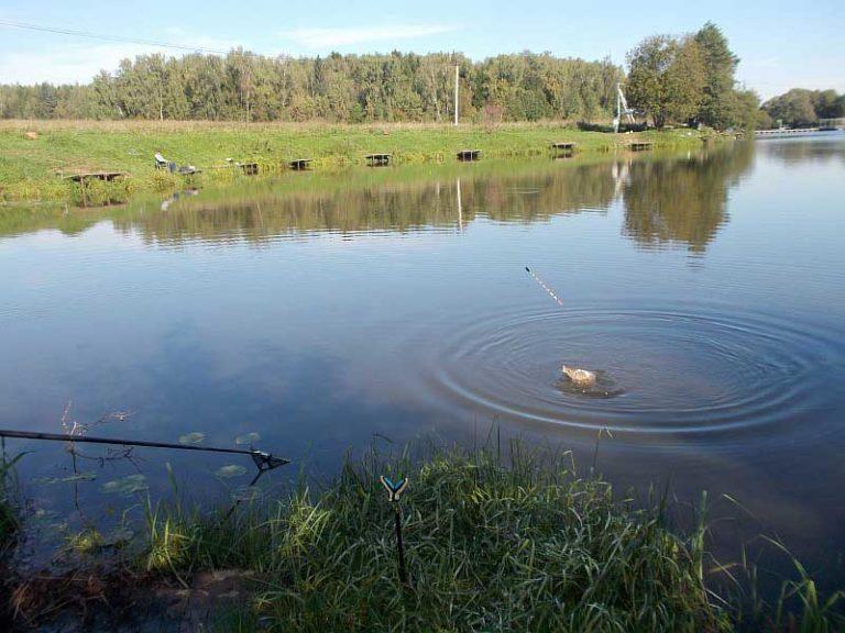 рыбалка в стрелецкий ручей