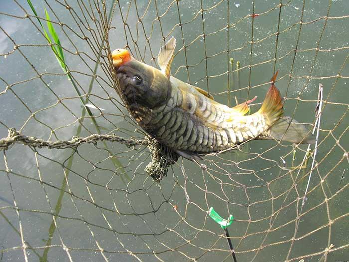 Рыба в Чернянино